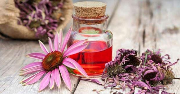 Польза эхинацеи для лечения заболеваний кожи: грибки, экзема, псориаз и не только…
