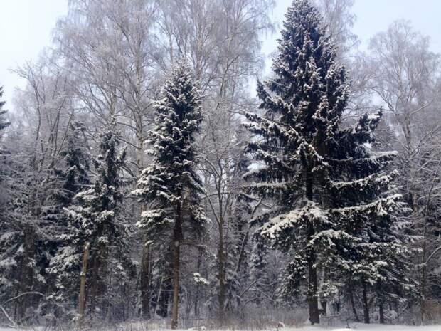 Красоты России (#517)