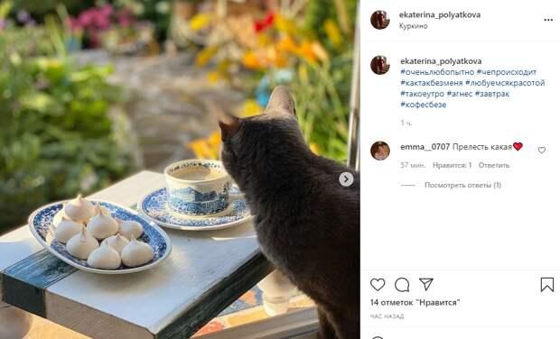 Фото дня: завтрак кошки-аристократки