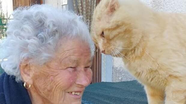 Старушка потеряла любимого кота при землетрясении. Каково же было счастье парочки вновь встретиться спустя 4 года!
