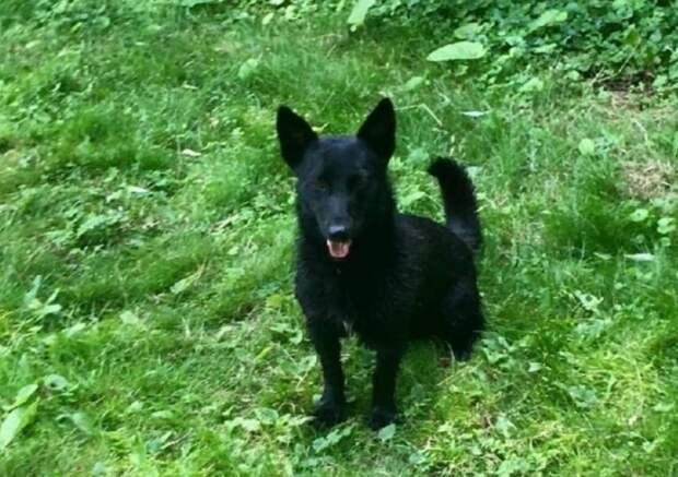 У собаки отказали лапы, Тимка был очень плох. Но в него верили и надежды оправдались!