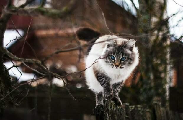 Настоящая фотомодель! город, домашние животные, забор, кот, кошка, село, улица, эстетика