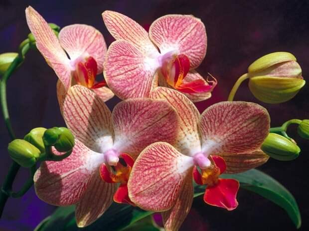 Вот что вам обязательно надо делать весной по вечерам, если в доме много орхидей