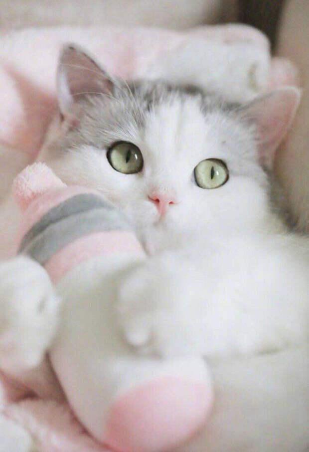 Эти глаза напротив...