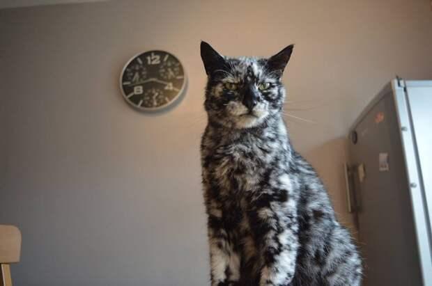 История кота Лоскутка с необычным мраморным окрасом