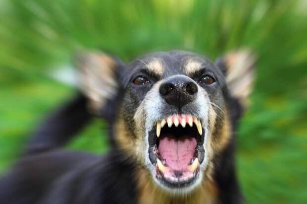 В Подмосковье 11-летний ребенок погиб после нападения собак
