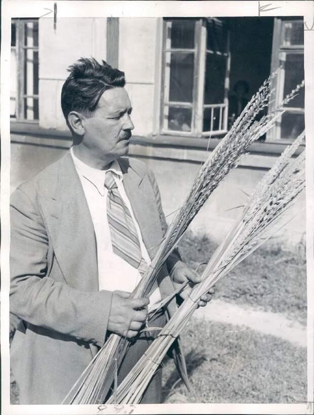 1946. Профессор пришел к выводу, что гибридная пшеница увеличивает урожай