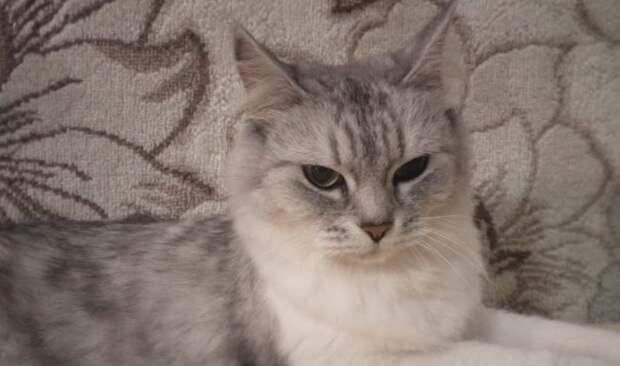 Кошка осталась без хозяйки, и едва не пoгибла от одиночества и тоски