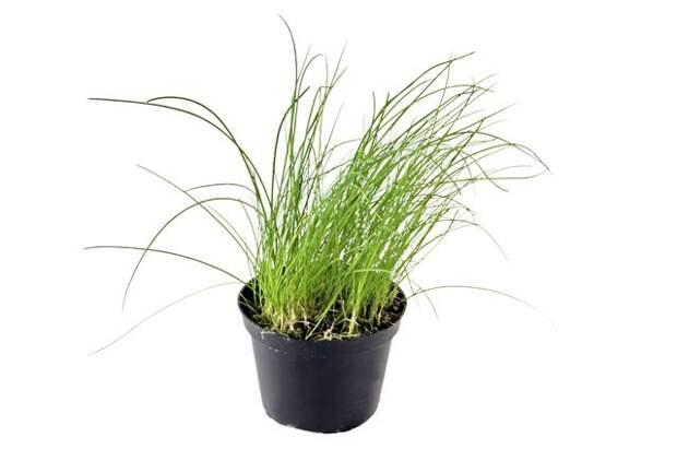 Сад и огород в квартире. Как вырастить кусочек лета на подоконнике?