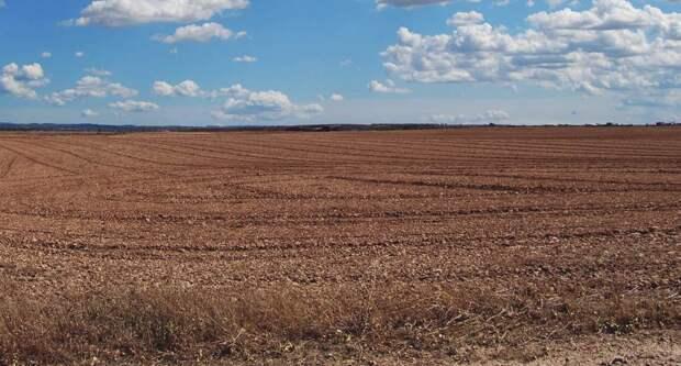 Крупную земельную махинацию выявили в Симферопольском районе