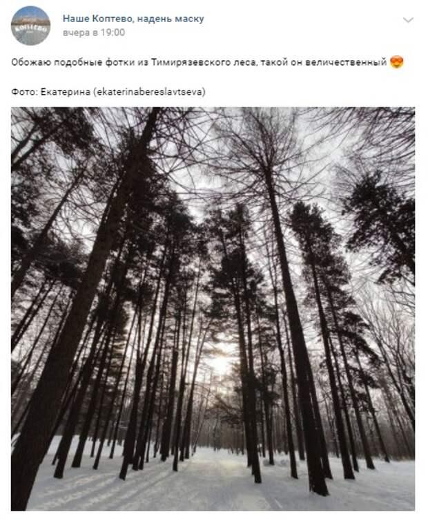 Фото дня: величие Тимирязевского леса