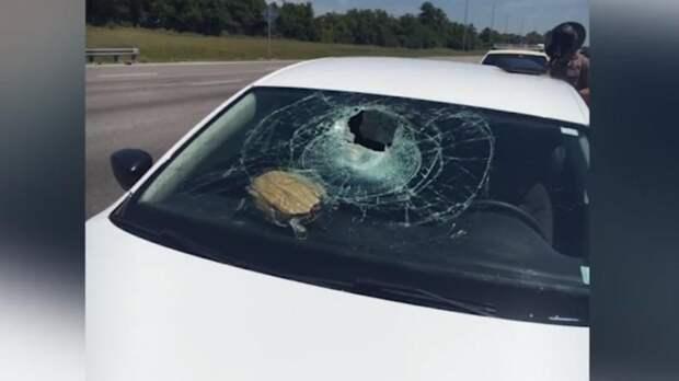 Черепаха пробила стекло машины и влетела в голову пенсионерке