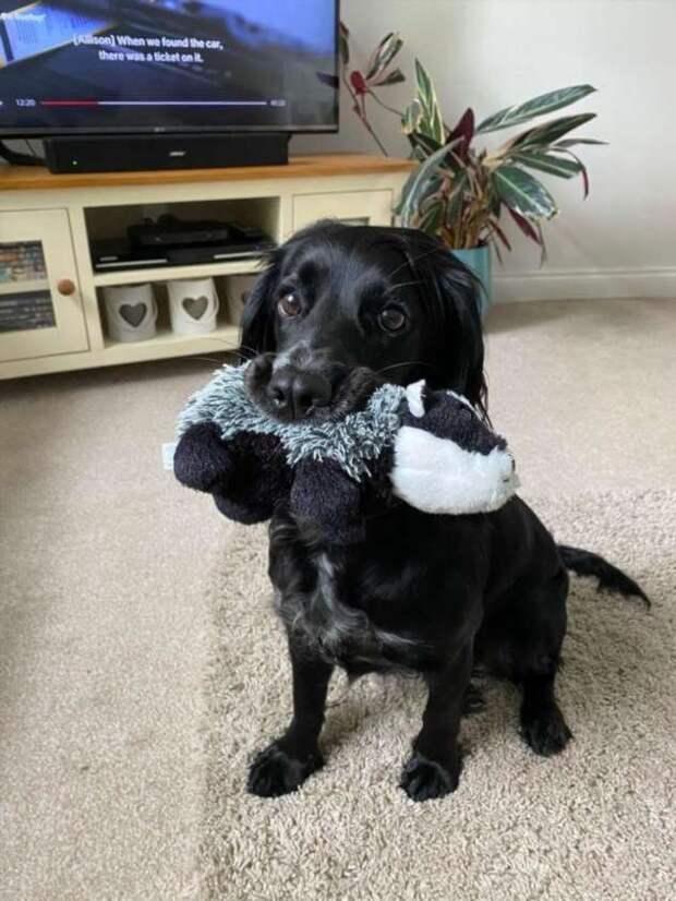 Фотодоказательства, что всем домашним зверушкам очень нужны свои игрушки! (24 фото)