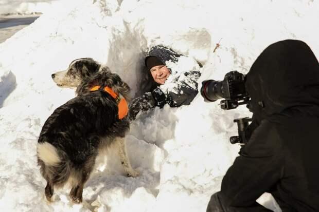 Собачья работа: как служат четвероногие спасатели