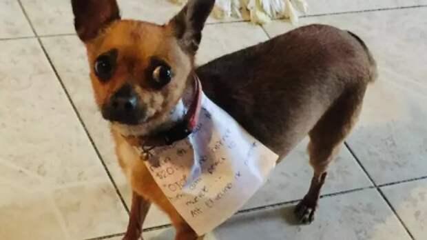 Мексиканец из-за карантина научил пса ходить в магазин