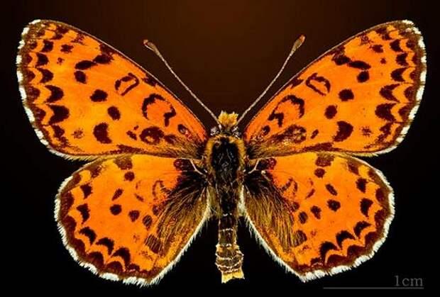 Российский биолог обнаружил в Израиле новый вид бабочек