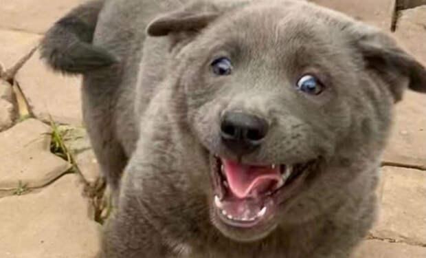 Семья завела котенка, но через месяц он начал лаять и люди выяснили, что это редкая порода собаки