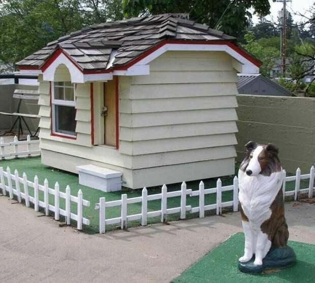 Долгая дорога домой: пес Бобби, который прошел через все Штаты, чтобы вернуться