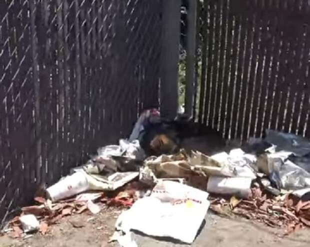 Собака в мусоре