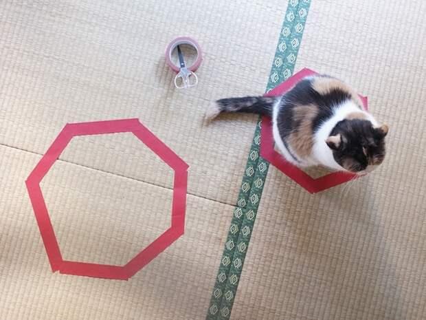 кошка сидит в кругу