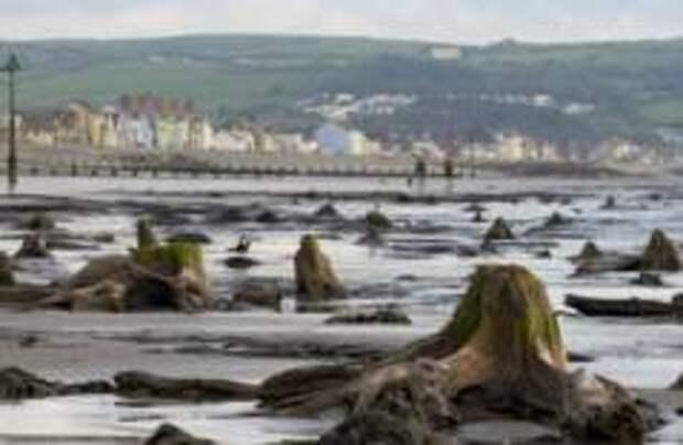 В Уэльсе ураган обнажил доисторический лес