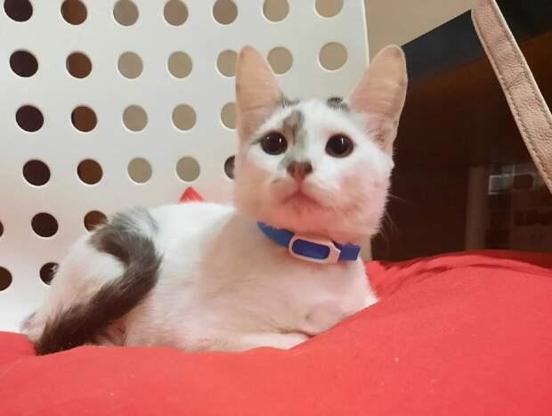 Все проходили мимо несчастного котенка, только Алена решилась спасти его. Посмотрите, каким он стал спустя 3 месяца
