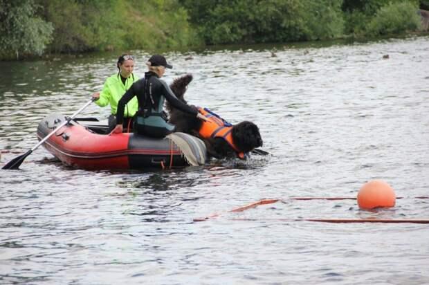 На водоемах столицы со спасателями будут дежурить четвероногие помощники