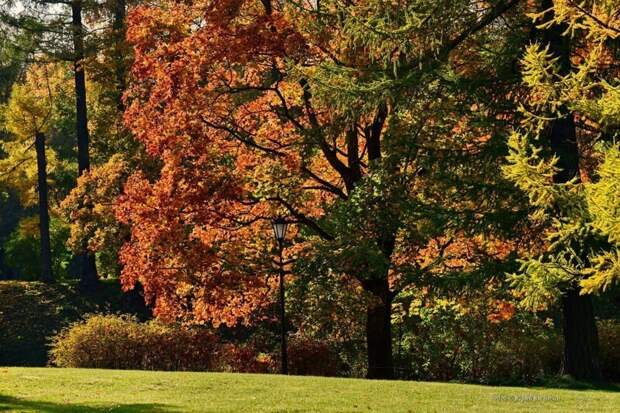 Бесподобный Гатчинский парк осенью
