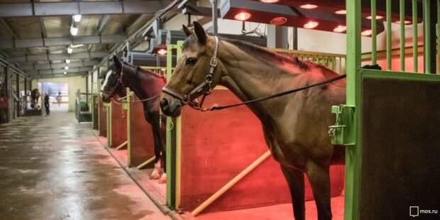 На Дыбенко мальчик потерял сознание, ударившись головой при падении с лошади