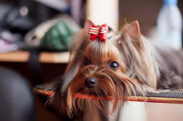 4 породы собак, которые подходят для квартиры
