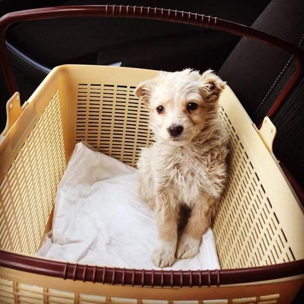 От одного вида накатывались слезы: маленький щенок прятался от прохожих за мусорным баком