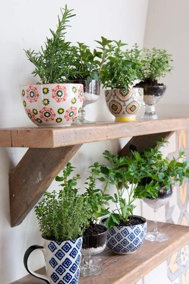12 уютных и полезных примеров из Instagram, которые вдохновят ваш сделать мини сад на кухне