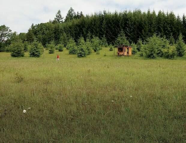 Рабочее место в лесу
