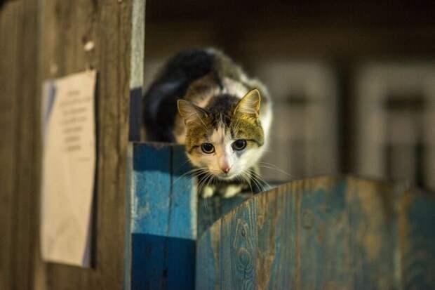 Что это там у тебя? город, домашние животные, забор, кот, кошка, село, улица, эстетика