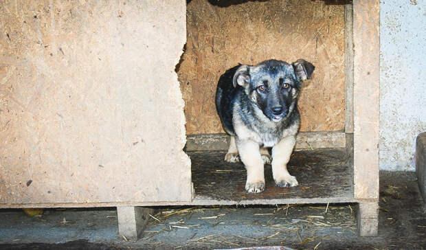 ВКазани прооперировали десятки собак