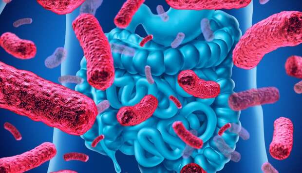 10 научных способов восстановить микрофлору кишечника и уберечь себя от болезней