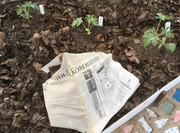 Применение старых газет в быту: 10 идей для практичной хозяйки