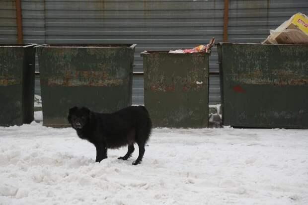 СКР рассказал о состоянии мальчика, истерзанного собакой в Бердске