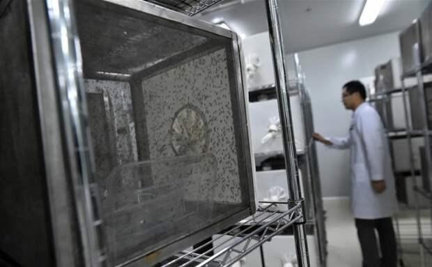 В Гуанчжоу был построен специализированный завод, где разводят комаров / Фото: russian.people.com.cn