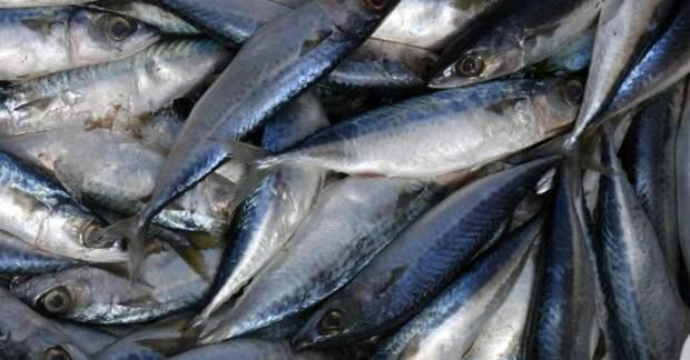 как солить рыбу