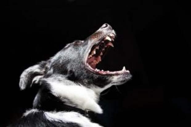 Поклонницу скандинавской ходьбы из Капотни атаковала стая собак