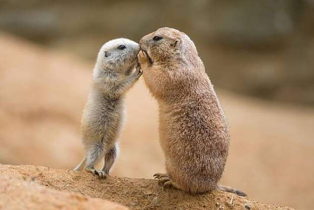 Как животные общаются между собой
