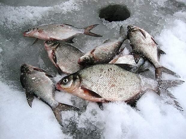 Размышления о рыбе, сале и безмотылке