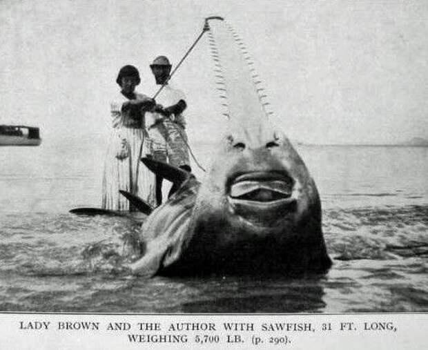 Удивительное рядом: мечи из носа рыбы-пилы