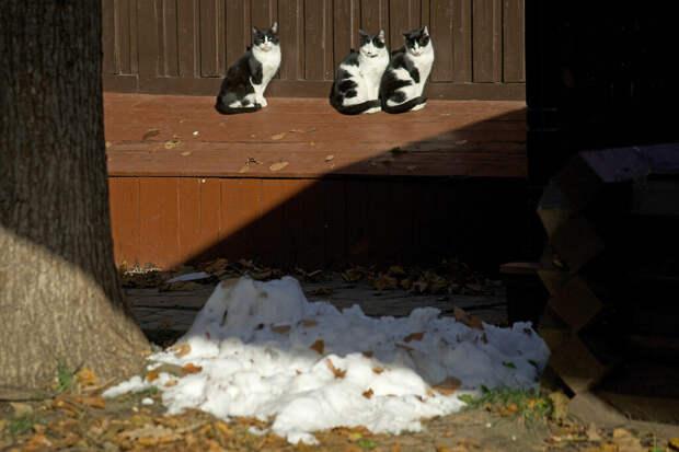 Москвичей предупредили о первых заморозках