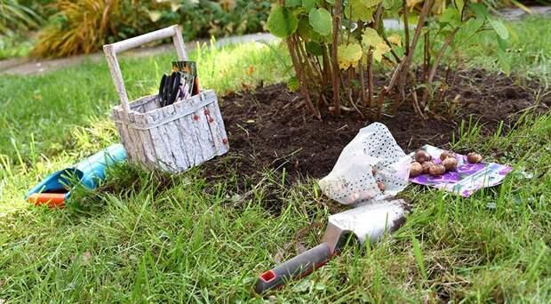 Что посадить в сентябре - октябре в огород, цветник и сад