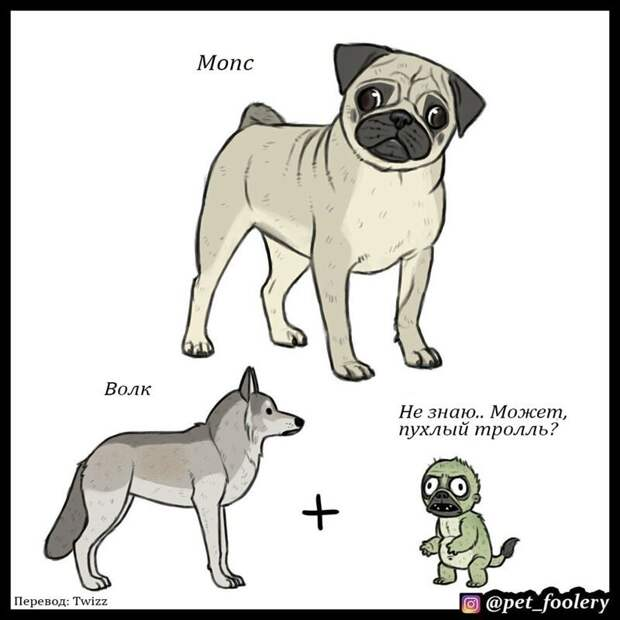 Волк + пухлый тролль: художник представил и нарисовал, как появились на свет разные породы собак Бенджамин Хед, Порода, животные, интересно, рисунок, собака