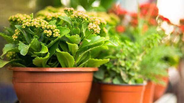 Топ-5 комнатных растений, которые можно долго не поливать