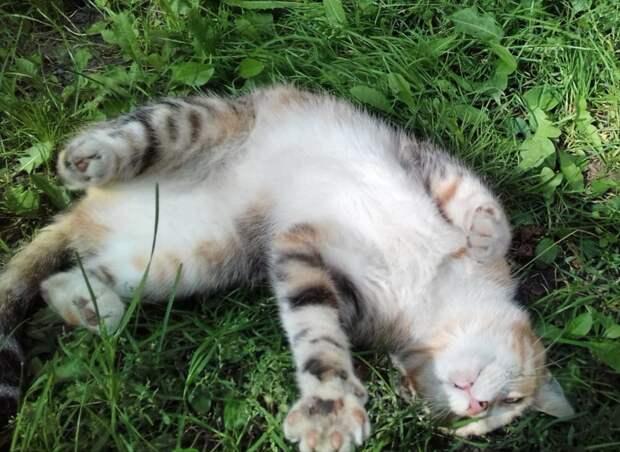 Яркая кошечка поистине уникального окраса очень хочет быть с человеком и делает всё для этого! Обратите на неё внимание!