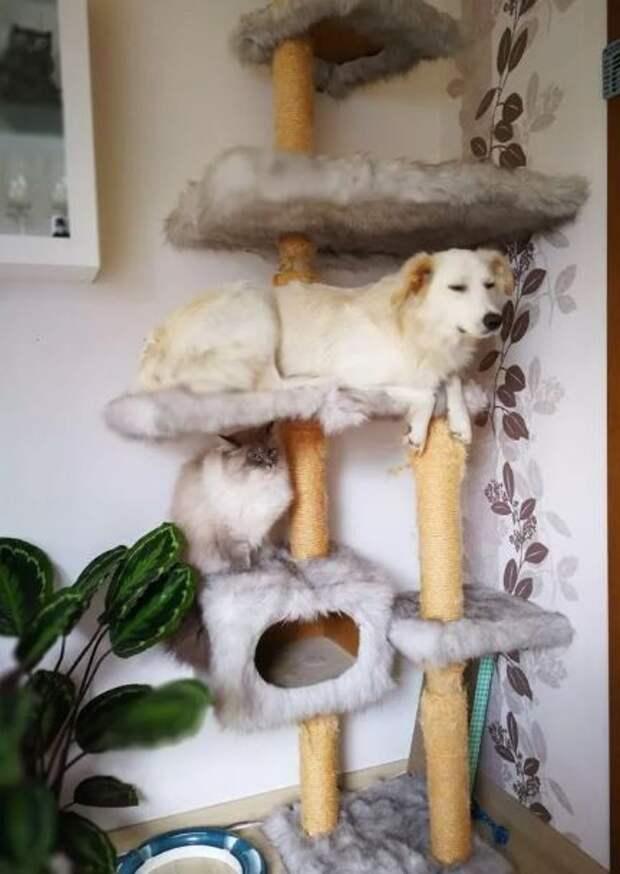 Что бывает, если щенка воспитали кошки